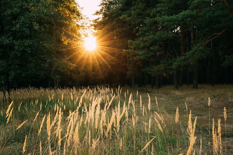 Działka rolna, leśna, siedliskowa, rekreacyjna - gdzie postawić domek mobilny?