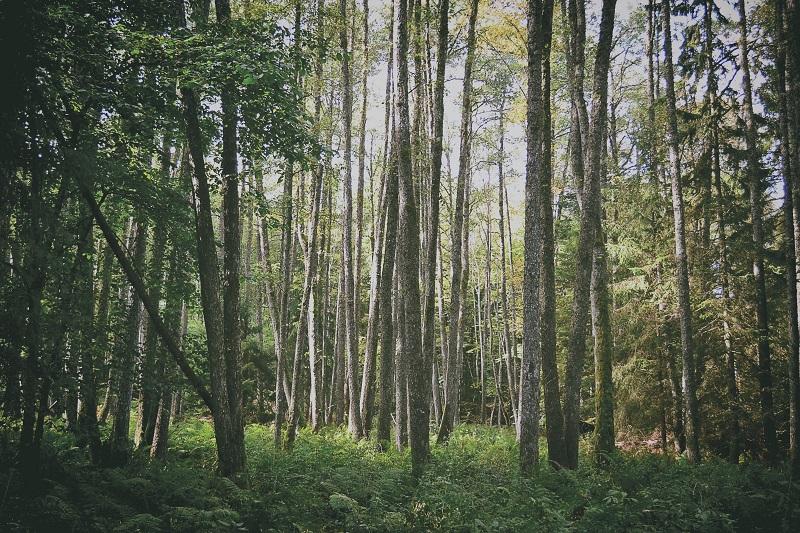 Działka leśna - zalety i wady